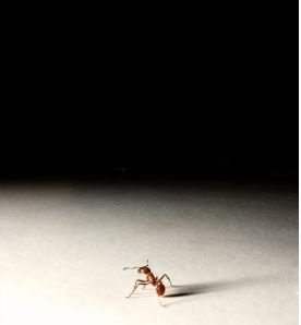 ant - fixing bugs