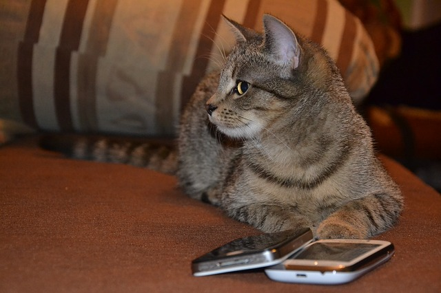 cat_with_mobile_email