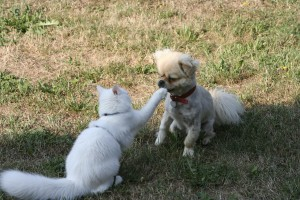 dog and cat fight - language matters