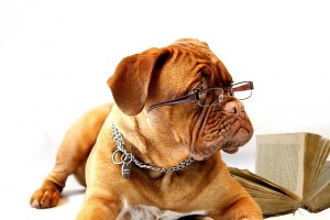dog with glasses show the problem